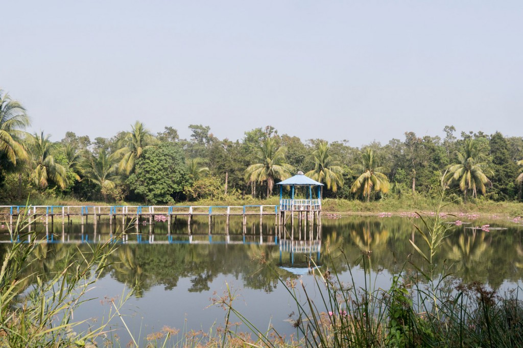 A freshwater pond, where tigers often come to drink. Bengal tigers drink saltwater too, which apparently accounts for their unusual aggression, but prefer fresh.