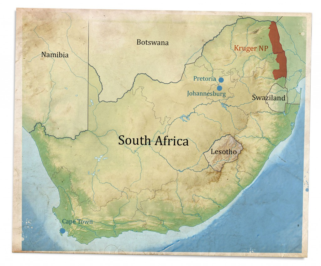 A Safari In Kruger National Park The Big Five The Travel Episodes