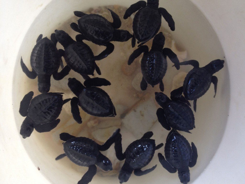 We're shown baby turtles by the only family there.